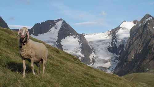 Truly spectacular nature at the very top of Tyrol